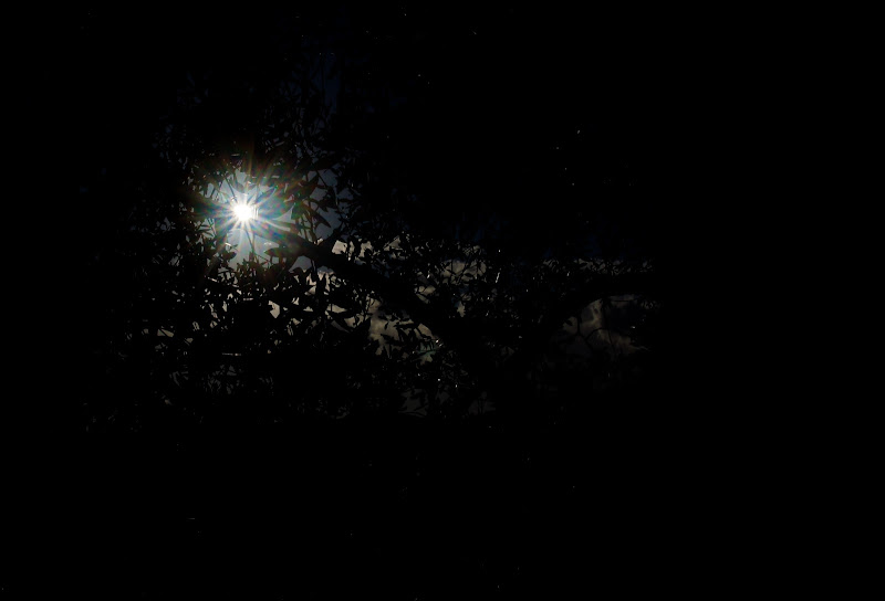 il timore della selva oscura ! di malte