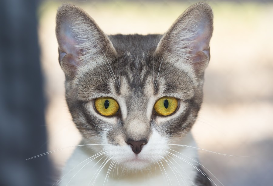 Luna ~~ Rescue Cat by Marianne Molloy - Animals - Cats Portraits