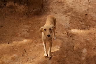 Photo: Dog at Dades Gorge