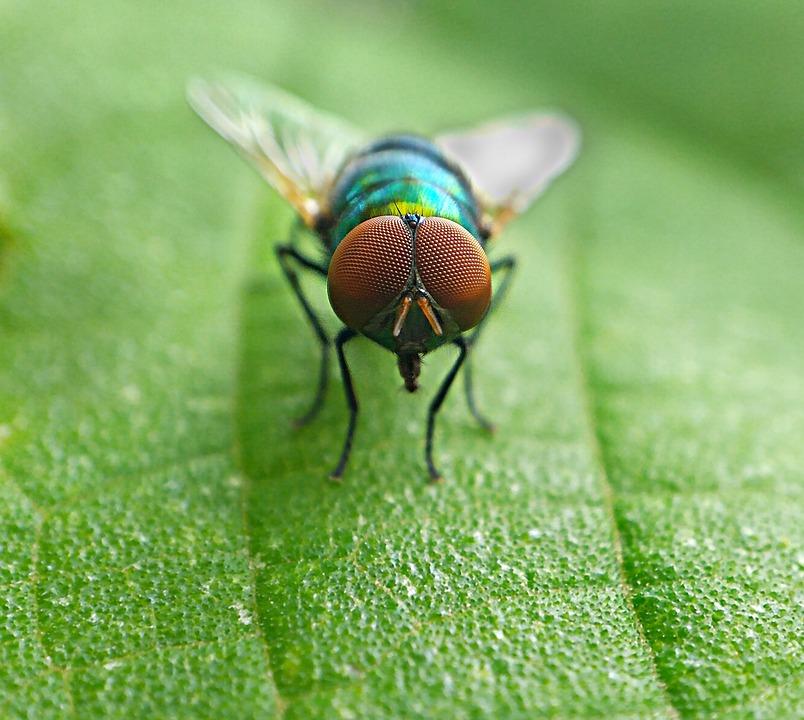 housefly-1828721_960_720.jpg