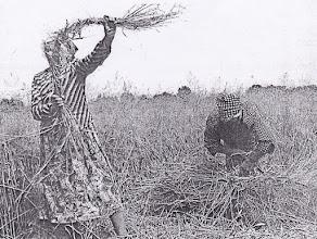 Photo: marokszedés és kötözőfonás a kötözéshez