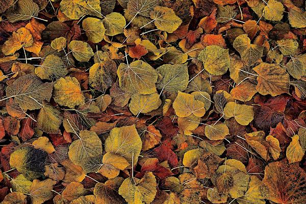 Calpestando l'autunno di paolo1954