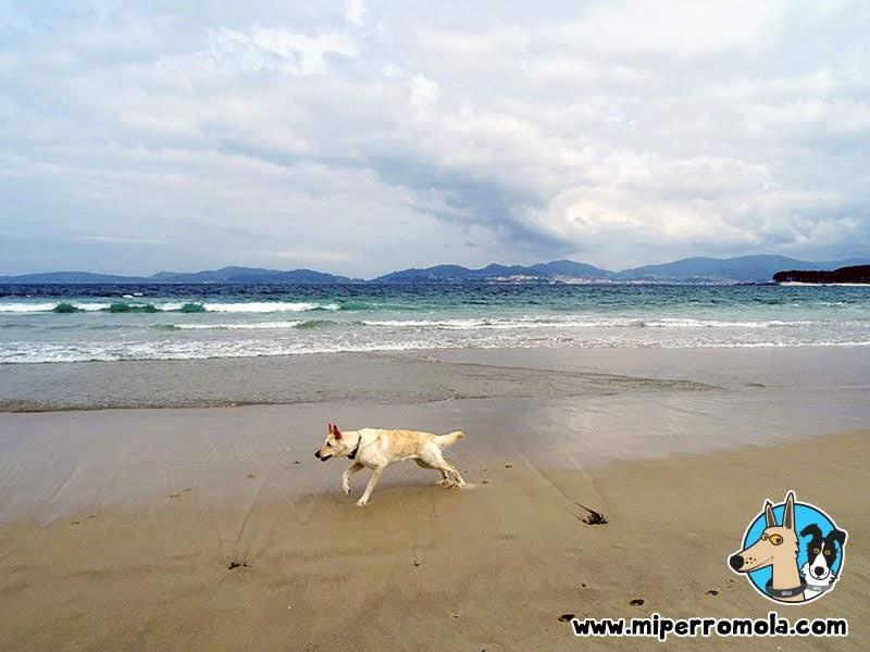 Playas Caninas de Vigo Praia Da Foz y Praia Da Calzoa