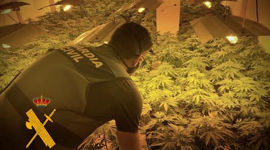 Hallan más de 100 plantas de marihuana en una vivienda alquilada en Roquetas
