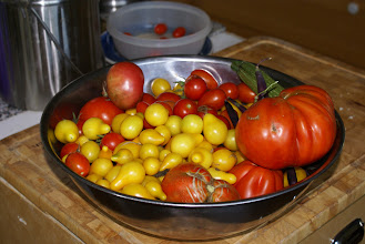 Photo: 8-8 August harvests were overwhleming... froze a lot of tomatoes for cooking this winter.  The yellow pears are good for sauce.