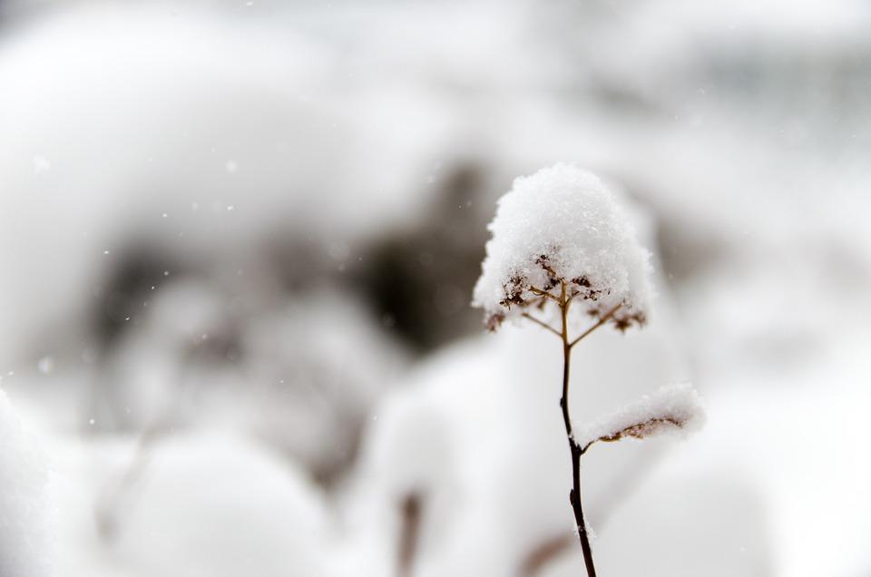 snow-690278_960_720.jpg