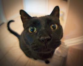 Photo: Cat in a Fisheye: Part 2