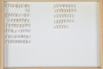 Photo: ZSM-HD-0001330 Gelis (Cryptinae), etc.