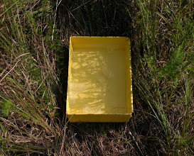 Photo: Ye ol' yellow pan trap (w/ soapy water)