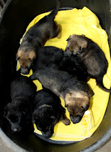 Photo: Difficult to do photos: close to four weeks, the C-litter