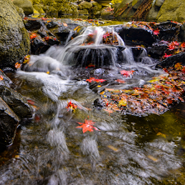 by Keith Sutherland - Nature Up Close Water ( canada, leaves, stream, flowing water )