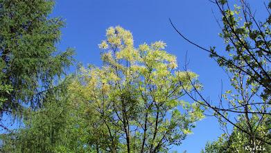 Photo: bolyhos fa virágban
