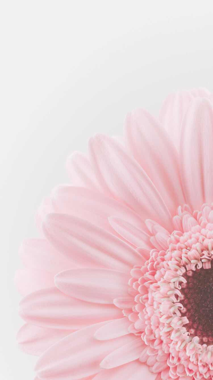 iPhone and Android Wallpapers Beautiful Pastel Flower Wallpaper ...