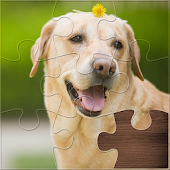 Life Jigsaw Puzzles