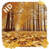 Golden Ginkgo Live Wallpaper