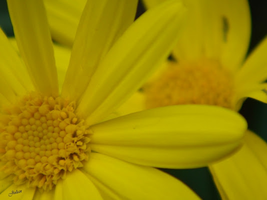 Yellow bomb! di Duddola