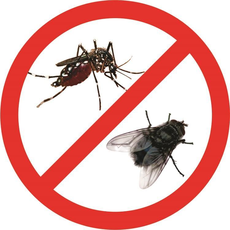 Công ty dịch vụ diệt côn trùng tận gốc Long An - Cty Anh Thư