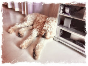 Photo: My dog Woof! found a nice place to rest in the +MacJunkyoffice...