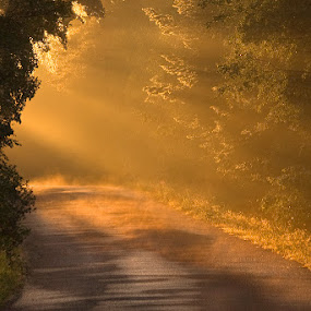 my way home  by Marie Gillander - Landscapes Forests