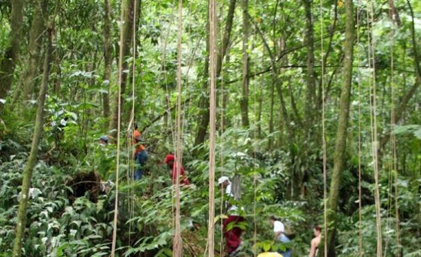 rainforest hiking trails