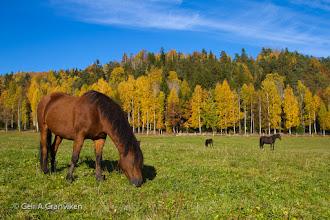 Photo: Autumn in the grazing yard