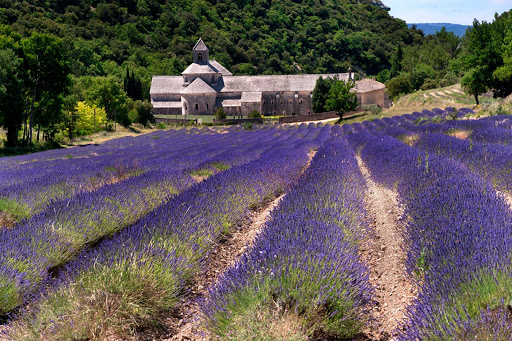 The lovely 12th-Century Sénanque Abbey is one of the best places to see the famed lavender fields of Provence, France.