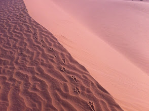 Photo: Footsteps on the sand dune