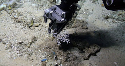 Photo: NURTEC's Kraken-2 ROV collecting coral specimen (Photo credit: CIOERT Research Team)