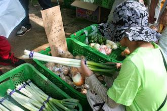 Photo: 平方村新田より小菅農園。長ネギ、玉ねぎ、赤玉ねぎ、ジャガイモ、ピーマン。畑は江戸川に隣接しています。