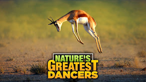 Nature's Greatest Dancers thumbnail