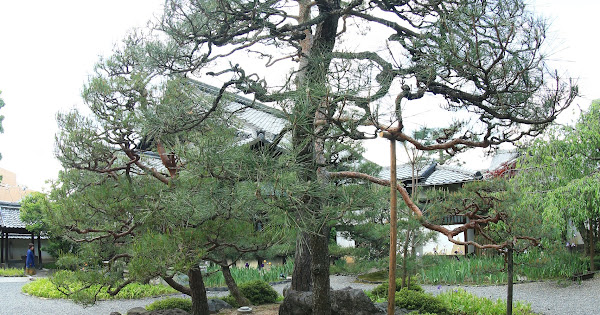 98. Tokujomyou-in (100 Japanese Garden in Kyoto I recommend)