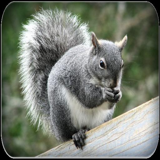 App Insights: Squirrel sounds   Apptopia