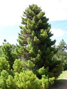 Uno de los árboles en el parque