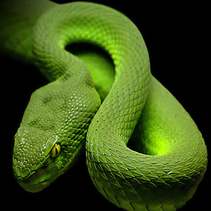Green Mamba4 black2 square final2 NR2.JPG
