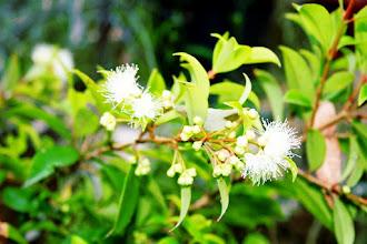 Photo: 018/366 - Garden Flowers