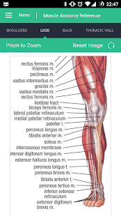 Muscle Anatomy Reference Guide - náhled