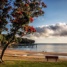 Murrays Bay, Auckland by Graeme Hunter - Landscapes Beaches