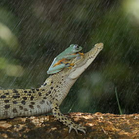 Now start raining..... by Bernard Tjandra - Animals Reptiles