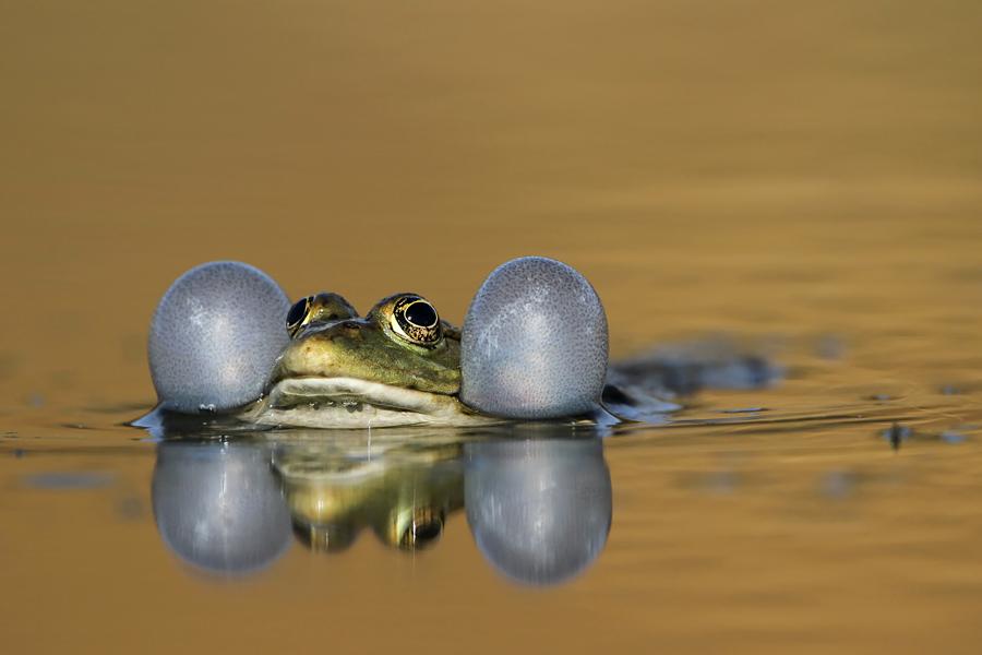 by Maja Waiss - Animals Amphibians