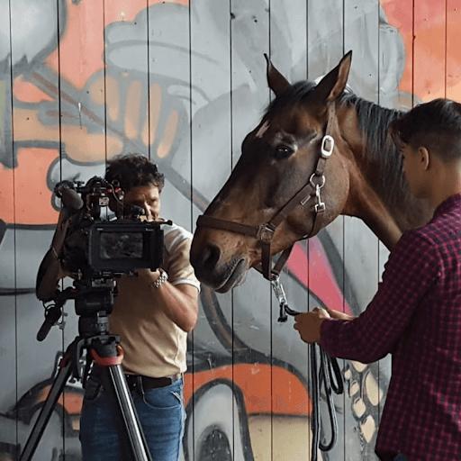 Leadership mit Pferd