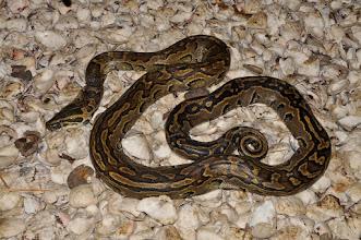 Photo: python