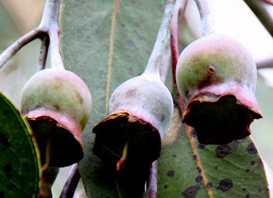 Photo: Year 2 Day 140 - More of Those Seed Pods