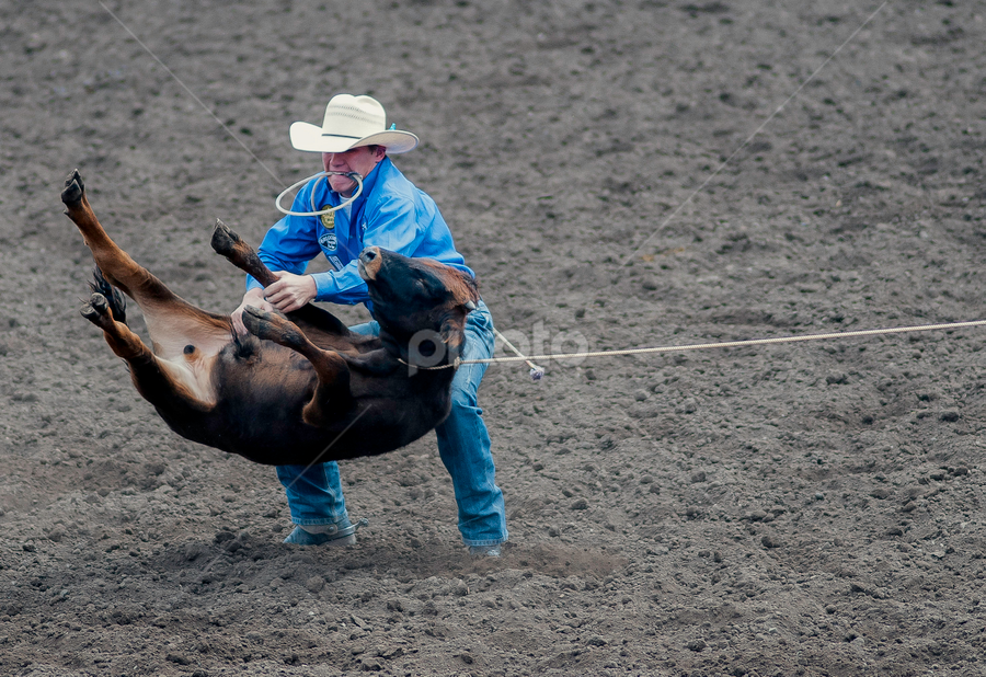 by Larry Rogers - Sports & Fitness Rodeo/Bull Riding