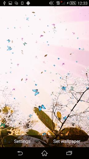春ライブ壁紙