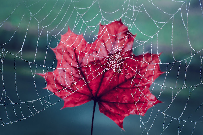 Il colore dell'autunno di gloriapostuma
