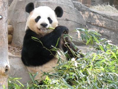 Photo Zoo d'Ueno