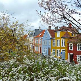 by Torill Michelsen - City,  Street & Park  Neighborhoods