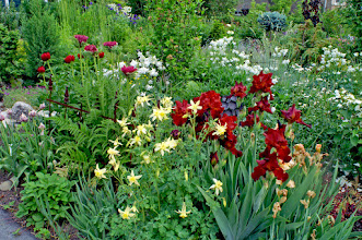 Photo: Tall Bearded Iris, Poppies and Columbine are showy in early spring