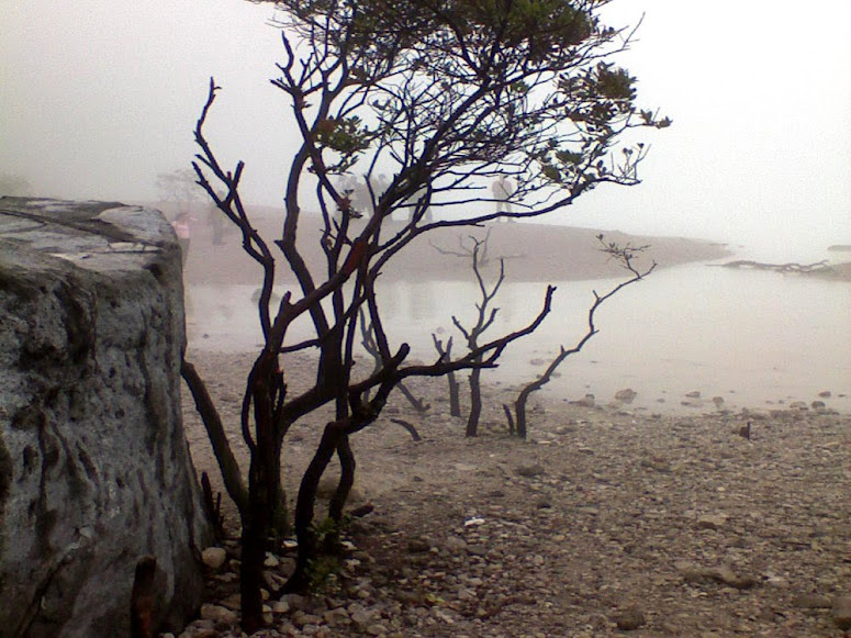Trees in Kawah Putih: The Livings and The Deads
