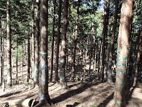 鞍部付近は植林
